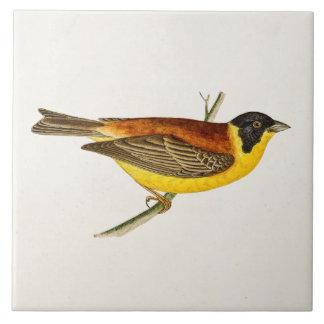 Ejemplo del pájaro de la canción del vintage - azulejo cuadrado grande