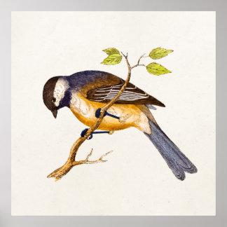 Ejemplo del pájaro de la canción del vintage - páj posters