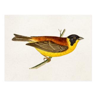 Ejemplo del pájaro de la canción del vintage - páj tarjeta postal