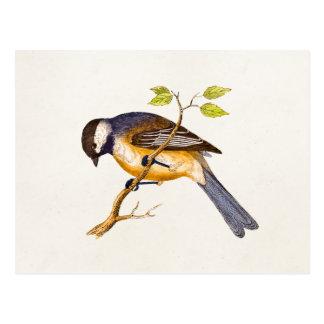 Ejemplo del pájaro de la canción del vintage - páj postal
