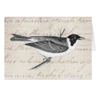 Ejemplo del pájaro de la canción del vintage - páj tarjeton