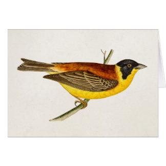 Ejemplo del pájaro de la canción del vintage - páj felicitacion