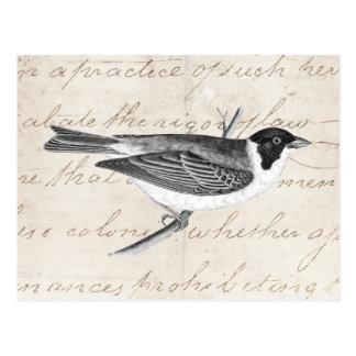 Ejemplo del pájaro de la canción del vintage - páj tarjetas postales