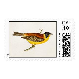 Ejemplo del pájaro de la canción del vintage - sello