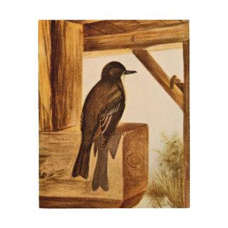 Ejemplo del pájaro de Phoebe Cuadros De Madera