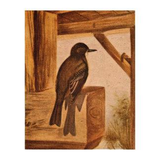 Ejemplo del pájaro de Phoebe Papel De Corcho