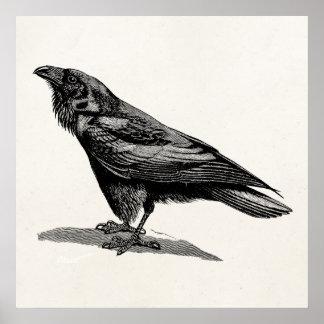 Ejemplo del pájaro del mirlo de cuervo del cuervo impresiones
