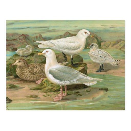 Ejemplo del pájaro del vintage de Islandia y de la Postal