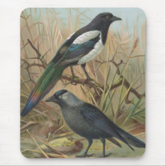 Ejemplo del pájaro del vintage de la urraca y del  alfombrilla de ratones