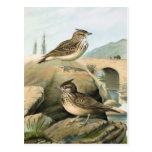 Ejemplo del pájaro del vintage de las alondras tarjetas postales