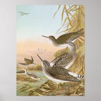 Ejemplo del pájaro del vintage de las lavanderas posters
