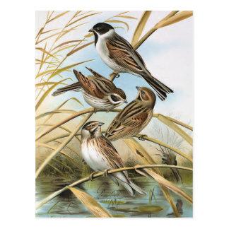 Ejemplo del pájaro del vintage de los empavesados  tarjetas postales