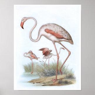 Ejemplo del pájaro del vintage del flamenco impresiones