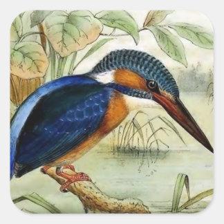 Ejemplo del pájaro del vintage del martín pescador pegatina cuadrada