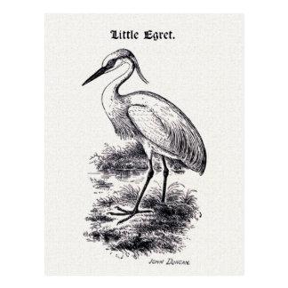 Ejemplo del pájaro del vintage del pequeño Egret Tarjetas Postales
