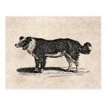 Ejemplo del perro del border collie de los 1800s d tarjetas postales