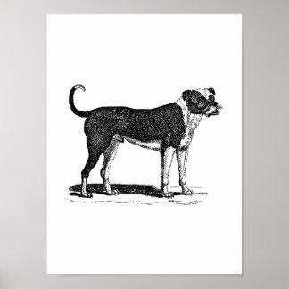 Ejemplo del perro del dogo de los 1800s del vintag poster