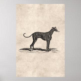 Ejemplo del perro del galgo de los 1800s del póster