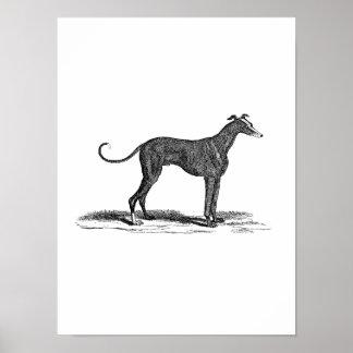 Ejemplo del perro del galgo de los 1800s del vinta poster