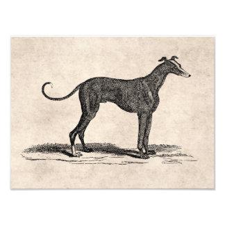 Ejemplo del perro del galgo de los 1800s del vinta impresión fotográfica