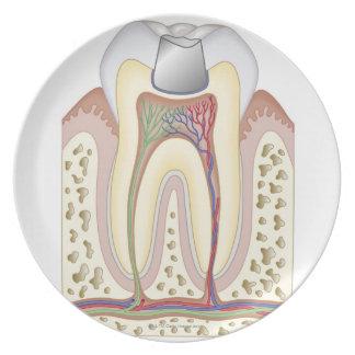 Ejemplo del relleno dental plato de comida