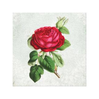 Ejemplo del rosa rojo en el falso pergamino del impresión en lienzo