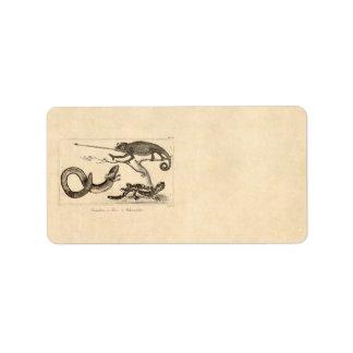 Ejemplo del Salamander del camaleón del lagarto de Etiquetas De Dirección