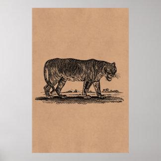 Ejemplo del tigre del vintage - tigres 1800 s afri posters