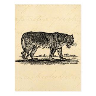 Ejemplo del tigre del vintage - tigres 1800 s afri postales
