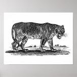 Ejemplo del tigre del vintage - tigres 1800's afri impresiones