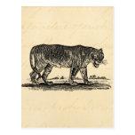 Ejemplo del tigre del vintage - tigres 1800's afri postales