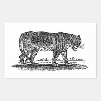 Ejemplo del tigre del vintage - tigres 1800's pegatina rectangular