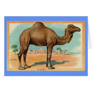 Ejemplo del vintage - camello del dromedario tarjeta de felicitación