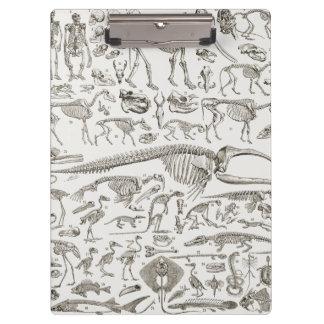 Ejemplo del vintage de huesos humanos y animales
