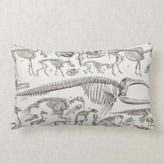 Ejemplo del vintage de huesos humanos y animales almohadas