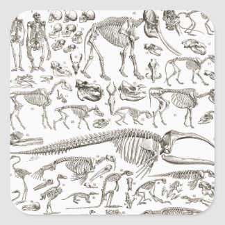 Ejemplo del vintage de huesos humanos y animales pegatina cuadrada