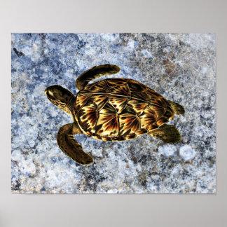 Ejemplo del vintage de la tortuga de mar de Hawksb Impresiones