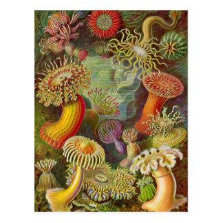 Ejemplo del vintage de las anémonas de mar postal