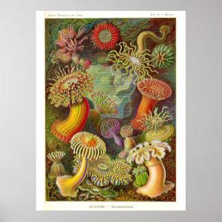 Ejemplo del vintage de las anémonas de mar póster