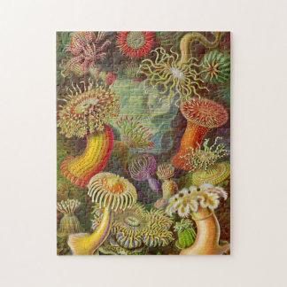 Ejemplo del vintage de las anémonas de mar puzzles con fotos