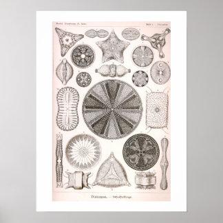 Ejemplo del vintage de las diatomeas posters
