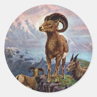 Ejemplo del vintage de las ovejas de Bighorn Pegatina Redonda