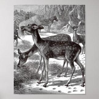 Ejemplo del vintage de los ciervos - impresión posters