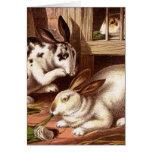 Ejemplo del vintage de los conejos tarjetas
