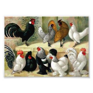 """Ejemplo del vintage de los """"gallos"""" cojinete"""