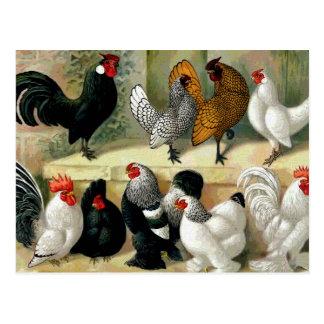 """Ejemplo del vintage de los """"gallos"""" tarjeta postal"""