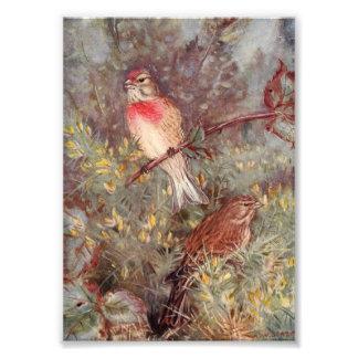 Ejemplo del vintage de los pájaros de Linnent Cojinete