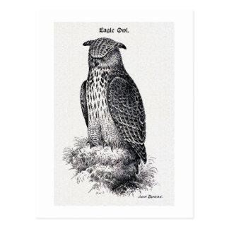 """""""Ejemplo del vintage del búho de Eagle"""" Postal"""