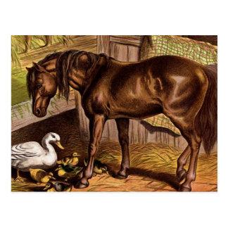 Ejemplo del vintage del caballo y de los anadones tarjeta postal