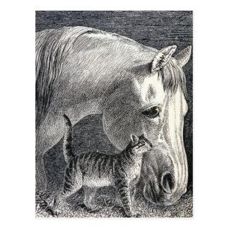 """Ejemplo del vintage del """"caballo y del gato"""" tarjetas postales"""